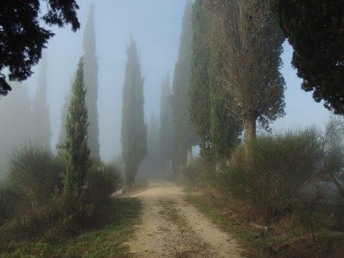 Nella nebbia – H. Hesse