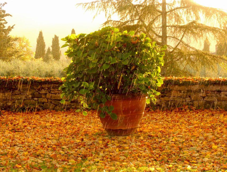 San Polo in Rosso particolare giardino