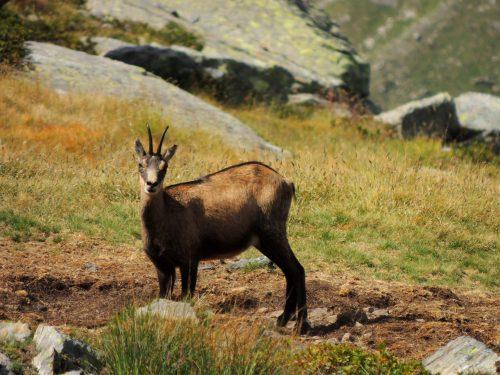Valle d'Aosta (8) – Escursioni da Valnontey