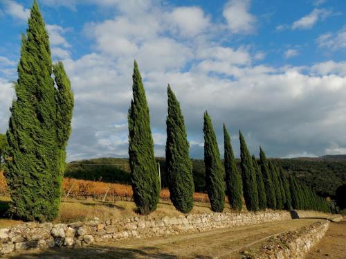 Castellina in Chianti - Serelle