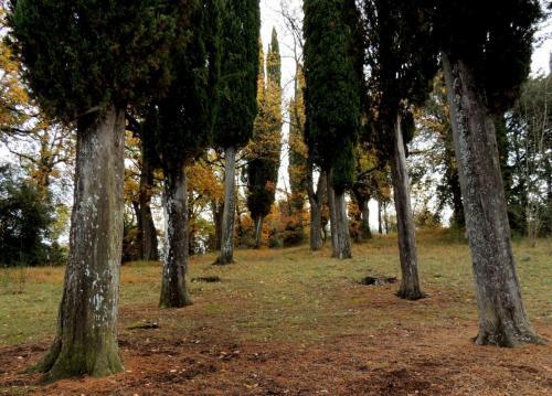 Poggibonsi - San Lucchese